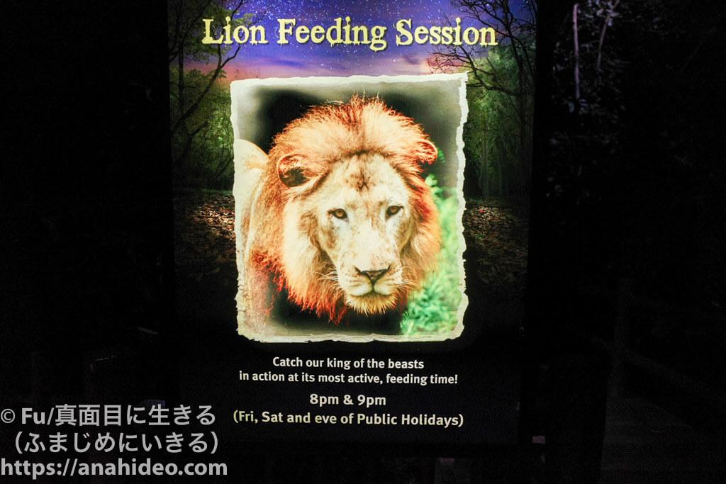 ライオンの餌付け