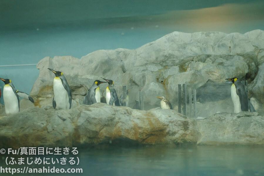 ペンギンの様子