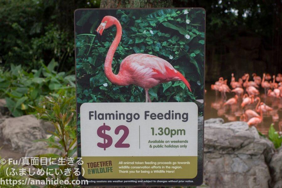 フラミンゴのエサやり