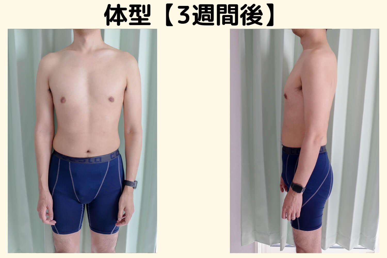 体型比較 3週間経過