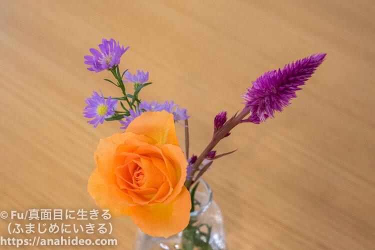 ハロウィンシーズンの花
